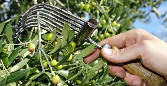 Vin et huile d'olive